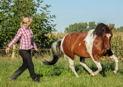 feel-your-horse-galerie-024